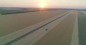 En traktor på det rhy fältet som samlar korn lager videofilmer