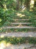 En trappuppgång i skogen som omges av en växt royaltyfri foto