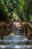 En trappuppgång leder upp till och med en tät skog med kanten av ett hus som är synligt på vänstersidan royaltyfri fotografi