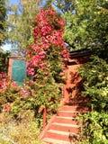 En trappuppgång och en husdörr i en skog Royaltyfri Fotografi