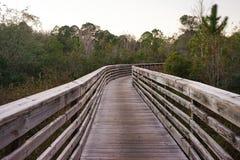 En träbro i träsk Fotografering för Bildbyråer