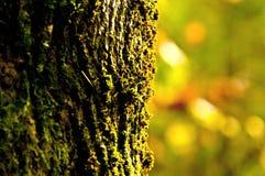 en tree Fotografering för Bildbyråer
