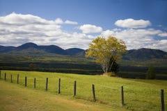 En tree i ett grönt fält Arkivbilder