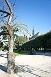 En tree i parken av Notre Dame Royaltyfri Foto