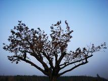 En tree med guling lämnar i nedgång royaltyfri bild