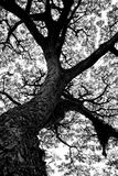 Tree av liv Royaltyfri Foto