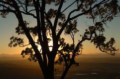 Tree och solnedgång Royaltyfria Foton