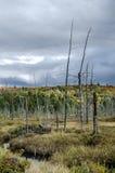 En trees sista dagar arkivbilder