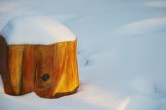 En treestump i snö Arkivbild