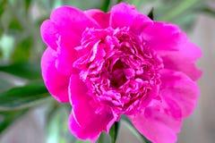 En trevlig färgblomma Royaltyfri Bild