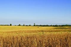 En trevlig sikt av kanadensiska fält på E Tidig h?stdag royaltyfri foto