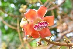 En tropisk blomma Royaltyfria Foton
