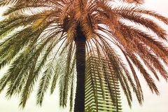 En tropisk palmträd på bakgrunden av himmel och skyskrapan, royaltyfri bild
