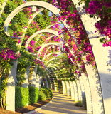 En tunnel av blommor. Arkivbild