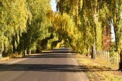 En tunnel av träd Royaltyfri Bild