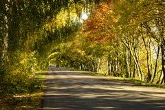 En tunnel av träd Fotografering för Bildbyråer