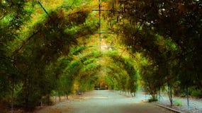 En tunnel av växter Arkivbilder