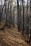 En tur i berget Arkivfoto