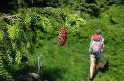 En turist bland skogarna av det Carpathian Arkivbild