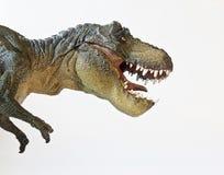 En Tyrannosaurus jagar på en vitbakgrund Arkivbild