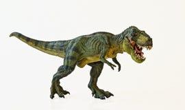En Tyrannosaurus jagar på en vitbakgrund arkivfoton