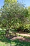 En tyst och fridsam bänk under ett träd arkivfoton