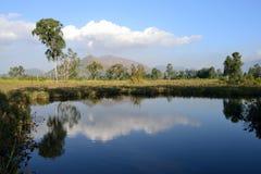 En tyst sjö med skuggor av träd Arkivfoton