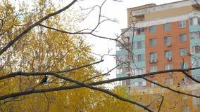 En ultrarapid av en galande på ett höstträd stock video