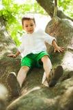 En un árbol Imagenes de archivo