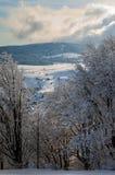 En un bosque nevoso Fotografía de archivo