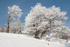 En un bosque nevoso Imágenes de archivo libres de regalías