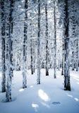 En un bosque spruce denso nevoso Fotos de archivo libres de regalías