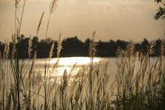 En un césped verde en la puesta del sol imagen de archivo