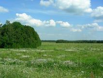 En un campo verde, un prado cubierto con las flores blancas, un bosque en el lado Fotografía de archivo