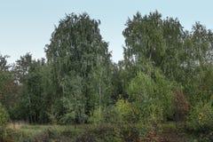 En un claro del bosque Fotografía de archivo libre de regalías