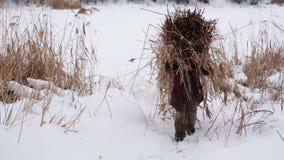 En un día de invierno nevoso escarchado, el aldeano lleva las cañas secas recolectadas en la suya detrás en un pajar sobre un cam almacen de metraje de vídeo