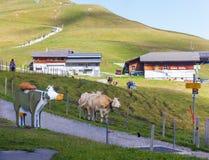 En un día de verano soleado en las montañas de las montañas suizas Imágenes de archivo libres de regalías