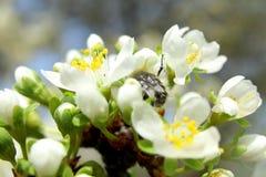 En un día soleado la abeja bebe el néctar Imágenes de archivo libres de regalías