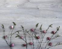 En un fondo de madera de una rama del abedul con los brotes florecientes de los huevos del riñón de una codorniz del verde del co Fotos de archivo libres de regalías