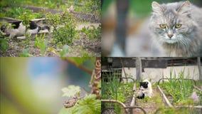 4 en 1: Un gato lame una pata, se sienta en el jardín, día soleado almacen de video