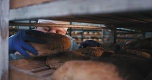 En un hombre gordo del panadero del sector panadero en un uniforme carismático él feliz toma el pan cocido fresco del industrial almacen de video