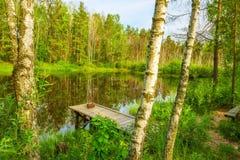 En un lago del bosque entre los árboles de abedules Fotos de archivo libres de regalías