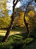 En un parque. Imagen de archivo libre de regalías