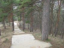 En un parque del pino abajo de una escalera de piedra Los pasos de piedra se ponen entre los pinos y van abajo escarpado a la par Foto de archivo