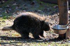 En un parque zoológico Imagenes de archivo