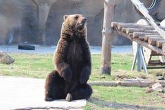En un parque zoológico Fotografía de archivo libre de regalías