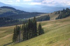 En un prado de la montaña fotografía de archivo