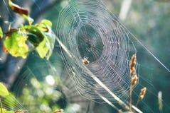 En un taiga, Rusia, Siberia Un web con una araña Imagen de archivo