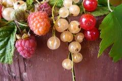 En un tocón de árbol de madera son las ramas de las pasas de las frambuesas, rojas y blancas cosechadas de arbustos de la fruta e imagen de archivo