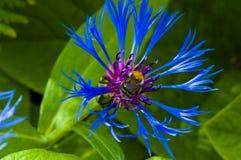 En una flor Imagenes de archivo